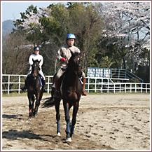 乗馬の魅力